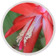 Christmas Cactus 3 Round Beach Towel