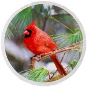 Christmas Cardinal - Male Round Beach Towel