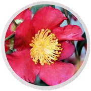 Christmas In A Flower Round Beach Towel
