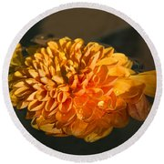 Chrysanthemum Gently Floating In The Fountain Of Campo De Fiori - Rome - Italy Round Beach Towel