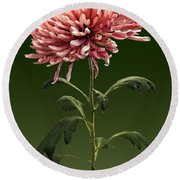 Chrysanthemum Shelbers Round Beach Towel