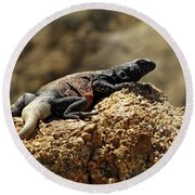Chucka Walla Basking Round Beach Towel