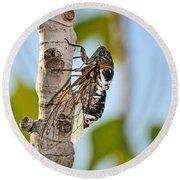 Cicada On Fig Tree Round Beach Towel