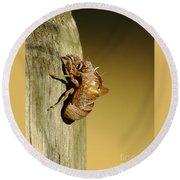 Cicada Shell Round Beach Towel