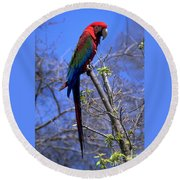 Cincy Parrot Round Beach Towel