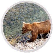 Cinnamon-colored Grizzly Bear By Moraine River In Katmai Np-ak  Round Beach Towel