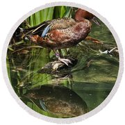 Cinnamon Teal Duck With Reflection Round Beach Towel