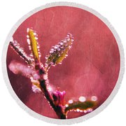 Circles From Nature - C33st04a Round Beach Towel
