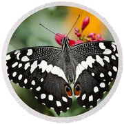 Citrus Swallowtail Butterfly  Round Beach Towel