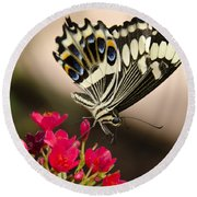 Citrus Swallowtail  Round Beach Towel