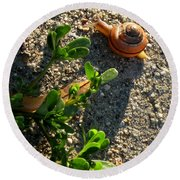 City Snail From Above Round Beach Towel