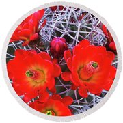 Claretcup Cactus Blooms Round Beach Towel
