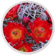 Claretcup Cactus In Bloom Wildflowers Round Beach Towel