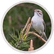 Clay-coloured Sparrow Pictures 35 Round Beach Towel