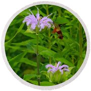 Clear-winged Hummingbird Moth Round Beach Towel