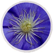 Clematis Beauty Round Beach Towel