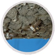 Cliff Swallows At Nests Round Beach Towel