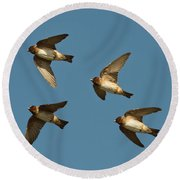 Cliff Swallows Flying Round Beach Towel
