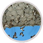 Cliff Swallows Returning To Nests Round Beach Towel
