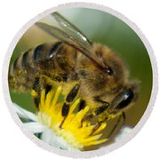 Close Encounter Of The Bee Kind Round Beach Towel