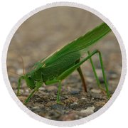Close Encounter Of The Green Kind Round Beach Towel