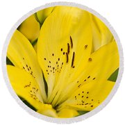 Close Up Beauty Round Beach Towel