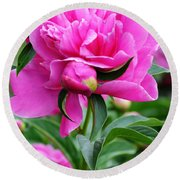 Close Up Flower Blooming Round Beach Towel
