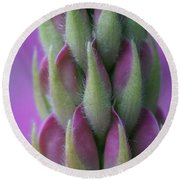 Close Up Lupin  Round Beach Towel