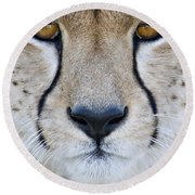 Close-up Of A Cheetah Acinonyx Jubatus Round Beach Towel