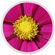 Close Up Of A Cosmos Flower Round Beach Towel