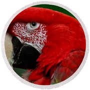 Close Up Of A Gorgeous  Green Winged Macaw Parrot. Round Beach Towel