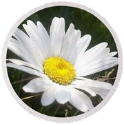 Close Up Of A Margarite Daisy Flower Round Beach Towel