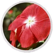Close Up Of A Red Busy Lizzie Flower Round Beach Towel