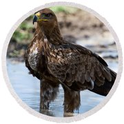 Close-up Of A Tawny Eagle Aquila Rapax Round Beach Towel