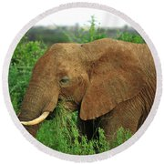 Close Up Of African Elephant Round Beach Towel