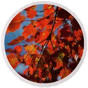 Close Up Of Bright Red Leaves With Blue Round Beach Towel