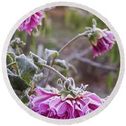 Close-up Of Flowers Covered By Frost Round Beach Towel