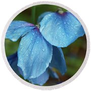 Close-up Of Himalayan Poppy Flowers Round Beach Towel