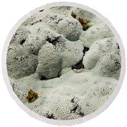Close Up Of Lichens Commonly Called Rock Moss Round Beach Towel
