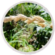 Close-up Of Prairie Grass Round Beach Towel