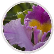 Close-up Of Purple Orchid Flowers Round Beach Towel