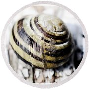 Close Up Of Sea Shell Round Beach Towel by Tommytechno Sweden