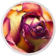 Close Up Of The Dry Rose Round Beach Towel