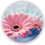 Close Up Of Two Pink Gerbera Daisies Round Beach Towel