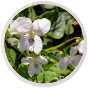 Close-up Of White Violets  Round Beach Towel