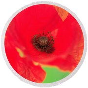 Close Up Poppies Round Beach Towel