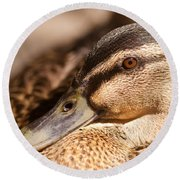 Close Up Shot Of Female Mallard Duck Round Beach Towel