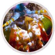 Close-up View Of A Mantis Shrimp Round Beach Towel
