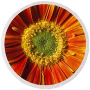 Close Up Yellow Orange Mum Round Beach Towel