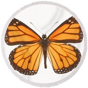 Closeup Of A Butterfly Round Beach Towel
